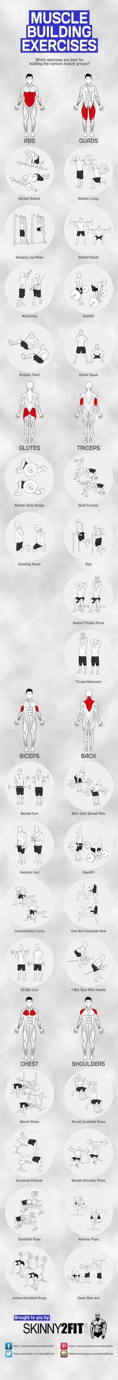 What are the top muscle building exercises for each muscle group? This graphic will show you the best exercises for serious strength and muscle gains. #bodybuilding #bodybuilder #strength #muscle #gains #swole #fitness #health