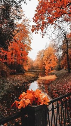 Orange Aesthetic, Autumn Aesthetic, Autumn Scenes, Autumn Cozy, Fall Wallpaper, Heart Wallpaper, Fall Pictures, Fall Images, Fall Season Pictures