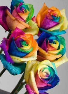 Real rainbow roses. best flowers ever... wouldn't they be awesome wedding flowers?! I'm having a color crisis anyways... oooh i'm good (;