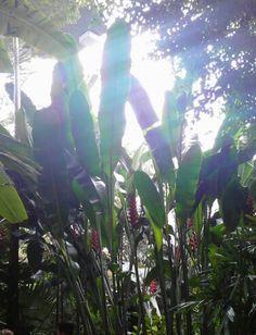 Sun coming through the plants