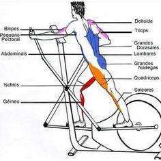 velo elliptique muscles sollicites programme musculation pinterest v lo elliptique velo. Black Bedroom Furniture Sets. Home Design Ideas