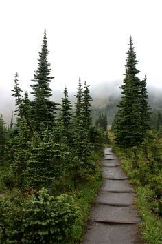 Mount Rainier Hiking Trail | Washington  //by Russ David