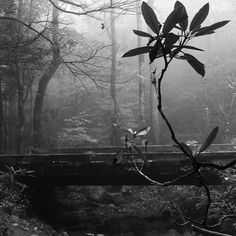 A branch in the fog #photography #fog #nature