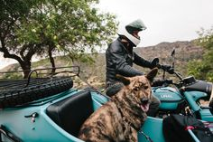 Dogs And Sidecars, A Match Made In Motorcycle Heaven.
