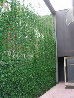 Inexpensive green wall. I like this idea.  Put up a simple wire guide at the top of the fence and let the plants grow up.  Could be ivy, clematis, ornamental grape, etc.