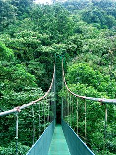"i think i'm developing an obsession with ""rope"" bridges. long ones! #landscape #costarica #bridge"