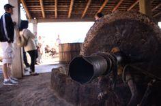 Tahona para el proceso de molienda del agave para producir Mezcal Convite.