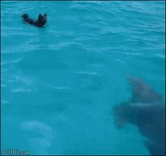 rainbow in your eyes | 4gifs:   Dolphin and dog swim together