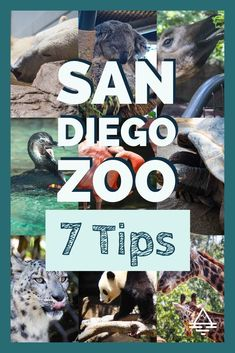 Check out these 7 tips for a day at the San Diego Zoo in California! 7 Tips for a Sensational Day at the San Diego Zoo - TRIPS TIPS and TEES Us Travel Destinations, Family Vacation Destinations, Vacation Trips, Vacation Ideas, Vacation Travel, Family Vacations, San Diego Vacation, San Diego Travel, Visit San Diego