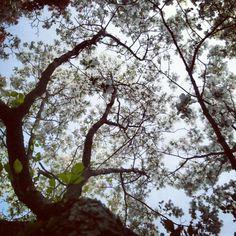 #garden, #flower - @birdofgod- #webstagram