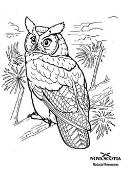 Coloring Pages Detailed Owl Easy