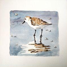 "Nsmorrart Original 8""x 8"" Watercolor Realism Painting Bird Sandpiper Reflection | eBay"