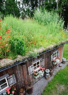 Green Roofs Everywhere. Green roof detail in Finland.fi via. Green Roofs Ever Roof Plants, Shed Roof Design, Earthship Home, Living Roofs, Living Walls, Roof Detail, Natural Building, Green Building, Earth Homes