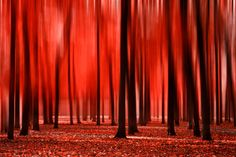 Hey, I found this really awesome Etsy listing at https://www.etsy.com/listing/165959674/red-colors-of-autumn-surreal-photo-red