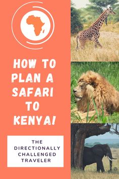 Learn how to plan a dream safari to Kenya! From seeing the Great Migration to taking a hot air balloon ride over the Maasai Mara. Plan A, How To Plan, The Great Migration, Kenya Travel, Air Balloon Rides, Tourist Places, African Safari, Nice View, Where To Go