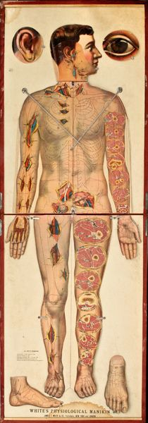 White's Physiological Manikin, produced by James T. White & Co., New York, 1889 Medical Art, Medical Science, Medical History, Anatomy Art, Human Anatomy, Medical Anatomy, Vintage Medical, Weird Science, Anatomy And Physiology