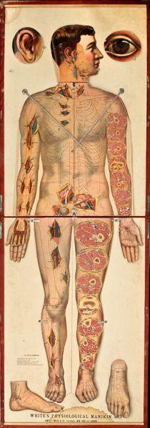 anatomi, anatom stuff