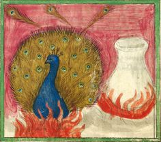 The peacock (symbol of the end of Albedo), next to an open flask. -- Aurora consurgens - Aurea hora, ca 1420 lllustration n°15