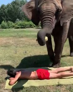 I'd hire as a masseuse - Niedliche tiere - Animals Funny Animal Memes, Funny Animal Videos, Funny Animal Pictures, Cute Funny Animals, Cute Baby Animals, Animals And Pets, Funny Cats, Cute Dogs, Funny Elephant Videos