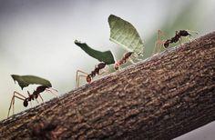 Formiche 'al lavoro' su un albero dello zoo di Francoforte