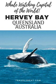 Hervey Bay on the Fraser Coast in Queensland Australia is an amazing place to go humpback whale watching. Australia Tourism, Queensland Australia, Western Australia, South Australia, Humpback Whale Migration, Housing Jobs, City Of Adelaide, Whale Watching Tours, Working Holidays