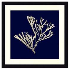 OKL - Seaweed on Navy II