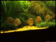 Another Piece Of Genius From Aquarium Design Group