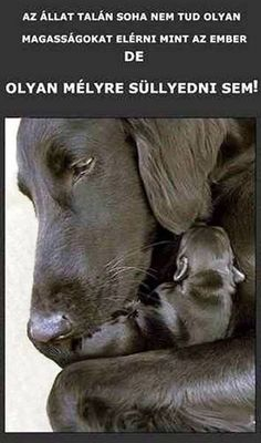 Dog Quotes Love, Funny Quotes, Hyena, Real Friends, Rainbow Dash, Quotations, Qoutes, Animals And Pets, Labrador Retriever