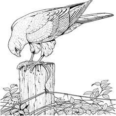 die 21 besten bilder von vogel malvorlagen   vogel