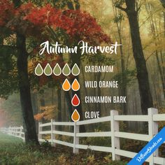 Autumn Harvest - Essential Oil Diffuser Blend