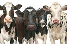 Love this gal on the right!Four Girls by Wendy Darker. Animals, Limited Edition Print on Deep Mounted Canvas. Cow Pictures, Animal Pictures, Farm Animals, Cute Animals, Cow Drawing, Holstein Cows, Cow Painting, Cute Cows, Cow Art