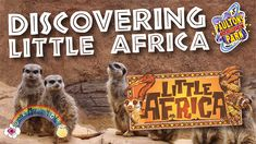 Going wild at Little Africa, Paultons Park