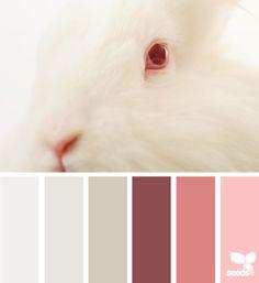 bunny tones