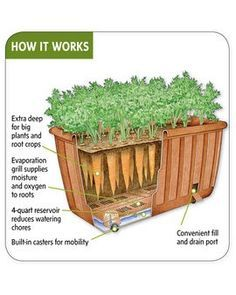 Self-watering vegetable planter. A relatively new (and fabulous) development in container gardening. container-gardening