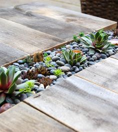 Beautiful succulent garden built into weathered deck panels.
