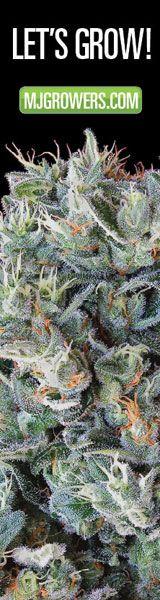 http://weedbay.net/index.php/700-mmj-clinical-studies  medical cannabis studies sorted by disease