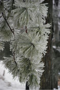 The beauty of an ice storm on the trees in the yard...