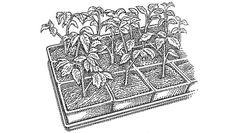 10. Harden Off Plants http://www.rodalesorganiclife.com/garden/grow-healthy-plants-from-seedlings-every-time/10-harden-off-plants