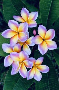 Folk Art Flowers, Flowers Nature, Exotic Flowers, Tropical Flowers, Amazing Flowers, Flower Art, Paper Flowers, Beautiful Flowers, Hawaiian Art