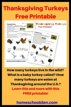 Thanksgiving Turkeys - Free Printable How much do your kids know about turkeys? How many turkeys live in the wild? What are male and female turkeys called? What is a baby turkey called? How many turkeys are eaten at Thanksgiving around the U.S.? Plus, the kids will do a matching activity between eggs and birds... from turkeys, geese, ducks and chickens to ostrich and quail. Which egg belongs with which bird? #freeThanksgivingPrintable #TurkeyWorksheet #homeschoolcurriculum Free Thanksgiving Printables, Free Printables, Kindergarten Worksheets, Worksheets For Kids, Baby Turkey, Homeschool Curriculum, Homeschooling, Turkey Calling, Hands On Activities