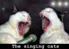 singing-cats