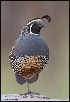 The quail is the monicker found on the BEVEE bag brand.