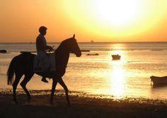 17ma-fiecval-salon-del-caballo-ii-campeonato-de-europa-de-caballos-pre-pura-raza-espanola-4012.jpg (800×563)