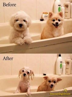 puppies in the bath