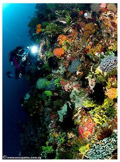 #5 Scuba dive the Great Barrier Reef.