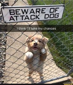 Memes Best Friends Funny Animal Pictures 56 Ideas For 2019 Funny Baby Quotes, Funny Baby Pictures, Funny Animal Photos, Funny Animal Memes, Cute Animal Pictures, Cute Funny Animals, Cute Baby Animals, Funny Cute, Funny Photos