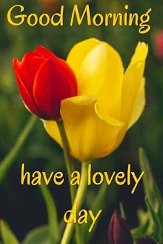 Good Morning Love You, Tuesday Quotes Good Morning, Good Morning Dear Friend, Good Morning Kisses, Latest Good Morning Images, Morning Wishes Quotes, Good Morning Images Flowers, Good Morning Beautiful Quotes, Good Morning Messages