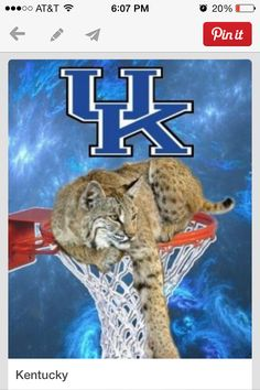 Uk wildcat