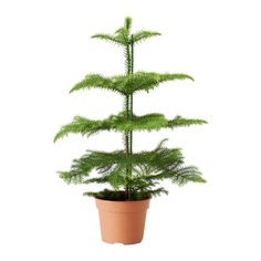 Plante verte ikea wish list appartement pinterest for Plantes decoratives exterieur