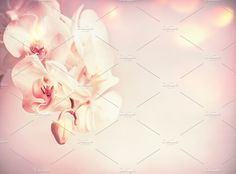 Orchids flowers at pink pale  by VICUSCHKA on @creativemarket